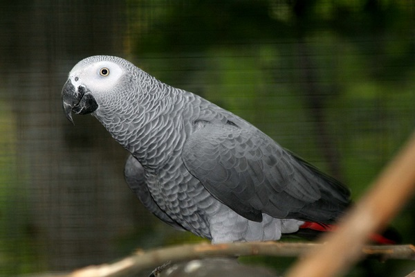 Попугаеобразные