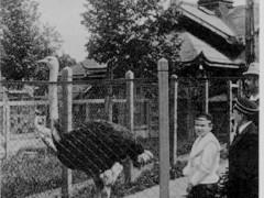 Фотография. У вольера страусов. 20-е гг. ХХ в. Подарена «Обществом по охране и исследованию сов» (Германия).