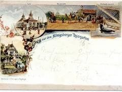 Открытка. Привет из Кёнигсбергского зоопарка. 1895 г. Подарена «Обществом по охране и исследованию сов» (Германия).
