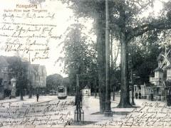 Открытка. Хуффен-аллея и вход в зоопарк. 1905 г. Подарена «Обществом по охране и исследованию сов» (Германия).