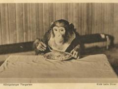 Открытка. Кики за обедом. 1930 г. Подарена «Обществом по охране и исследованию сов» (Германия).