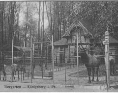 Открытка. Вольер оленей на главной аллее зоопарка (сейчас — вольер кенгуру). Подарена «Обществом по охране и исследованию сов» (Германия).
