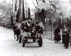 Главная аллея зоопарка. Тележка с пони. 1960-е гг. Из частного архива.