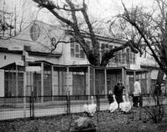 Летние клетки для попугаев. 1975 г. Из архива Калининградского зоопарка.