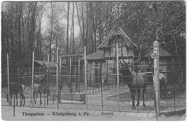 Открытка. Вольер благородных оленей. Подарена «Обществом по охране и исследованию сов» (Германия).