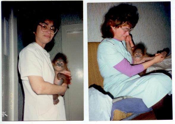Малаховская Т.В. с детёнышем орангутана Симоной 1996 г.