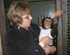 Фотография. Сотрудник зоопарка Федорянская Л.В. с детёнышем шимпанзе. Ноябрь 2006 г. Из частного архива.