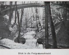 Фотография. Вид на ущелье Хуфенского ручья. Начало ХХ в. Подарена «Обществом по охране и исследованию сов» (Германия).
